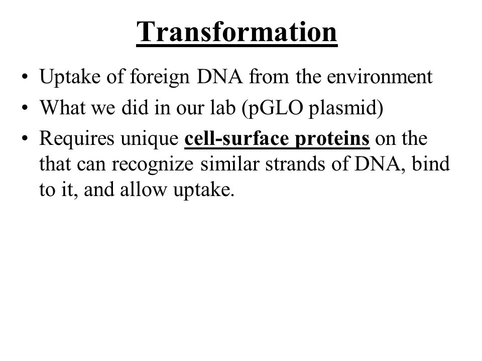 Transformation Uptake of foreign DNA from the environment What we did in our lab (pGLO plasmid) Requires unique cell-surface proteins on the that can recognize similar strands of DNA, bind to it, and allow uptake.