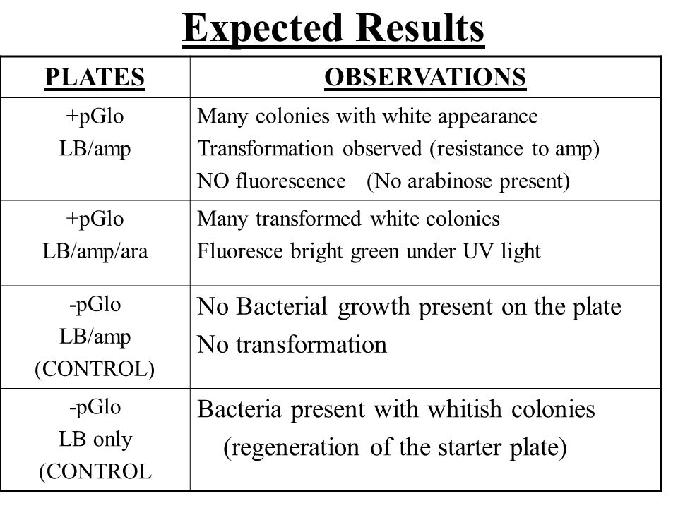 Expected Results PLATESOBSERVATIONS +pGlo LB/amp Many colonies with white appearance Transformation observed (resistance to amp) NO fluorescence (No arabinose present) +pGlo LB/amp/ara Many transformed white colonies Fluoresce bright green under UV light -pGlo LB/amp (CONTROL) No Bacterial growth present on the plate No transformation -pGlo LB only (CONTROL Bacteria present with whitish colonies (regeneration of the starter plate)