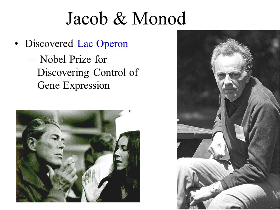 Jacob & Monod Discovered Lac Operon – Nobel Prize for Discovering Control of Gene Expression
