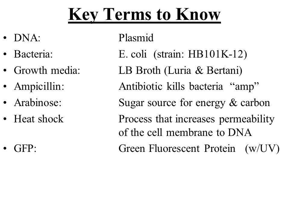 "Key Terms to Know DNA: Plasmid Bacteria: E. coli (strain: HB101K-12) Growth media: LB Broth (Luria & Bertani) Ampicillin:Antibiotic kills bacteria ""am"