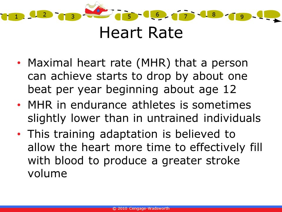 © 2010 Cengage-Wadsworth 1 2 3 4 5 6 7 8 9 Heart Rate Maximal heart rate (MHR) that a person can achieve starts to drop by about one beat per year beginning about age 12 MHR in endurance athletes is sometimes slightly lower than in untrained individuals This training adaptation is believed to allow the heart more time to effectively fill with blood to produce a greater stroke volume