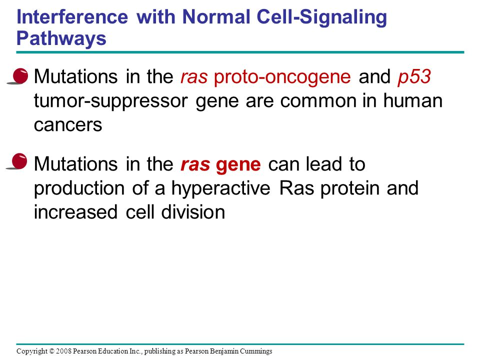 Copyright © 2008 Pearson Education Inc., publishing as Pearson Benjamin Cummings Interference with Normal Cell-Signaling Pathways Mutations in the ras