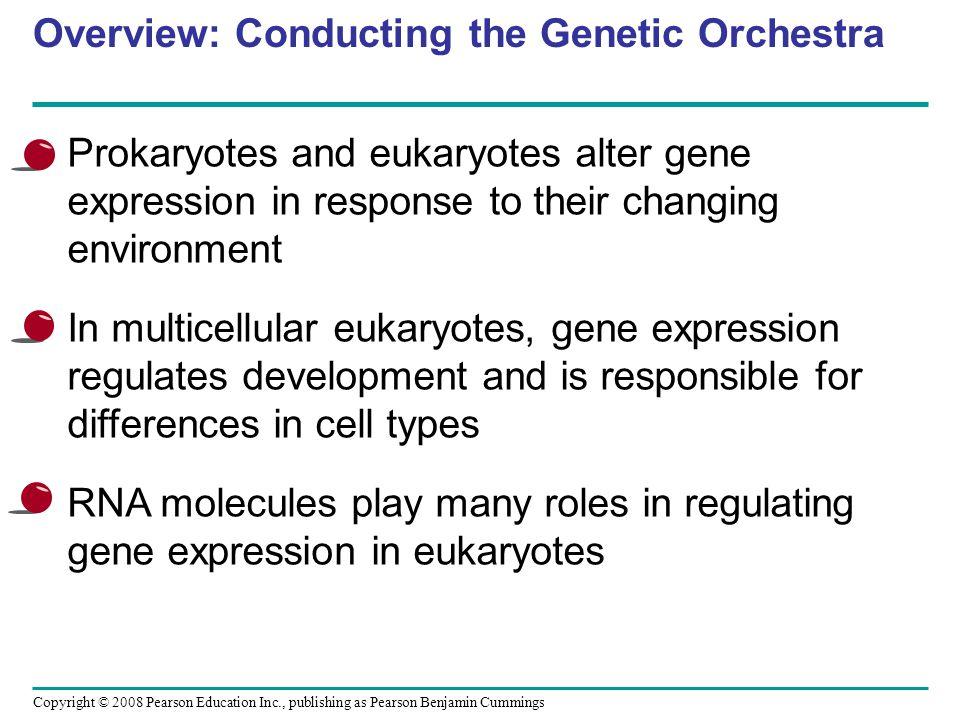 Fig. 18-UN6 Enhancer Promoter Gene 3 Gene 4 Gene 5 Gene 2 Gene 1