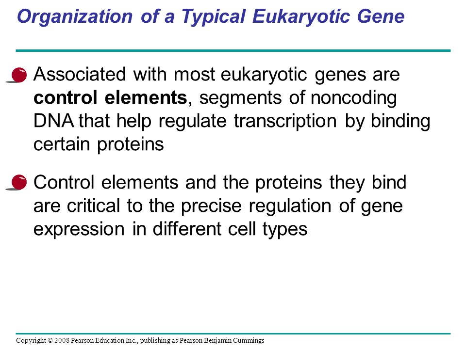Copyright © 2008 Pearson Education Inc., publishing as Pearson Benjamin Cummings Organization of a Typical Eukaryotic Gene Associated with most eukary