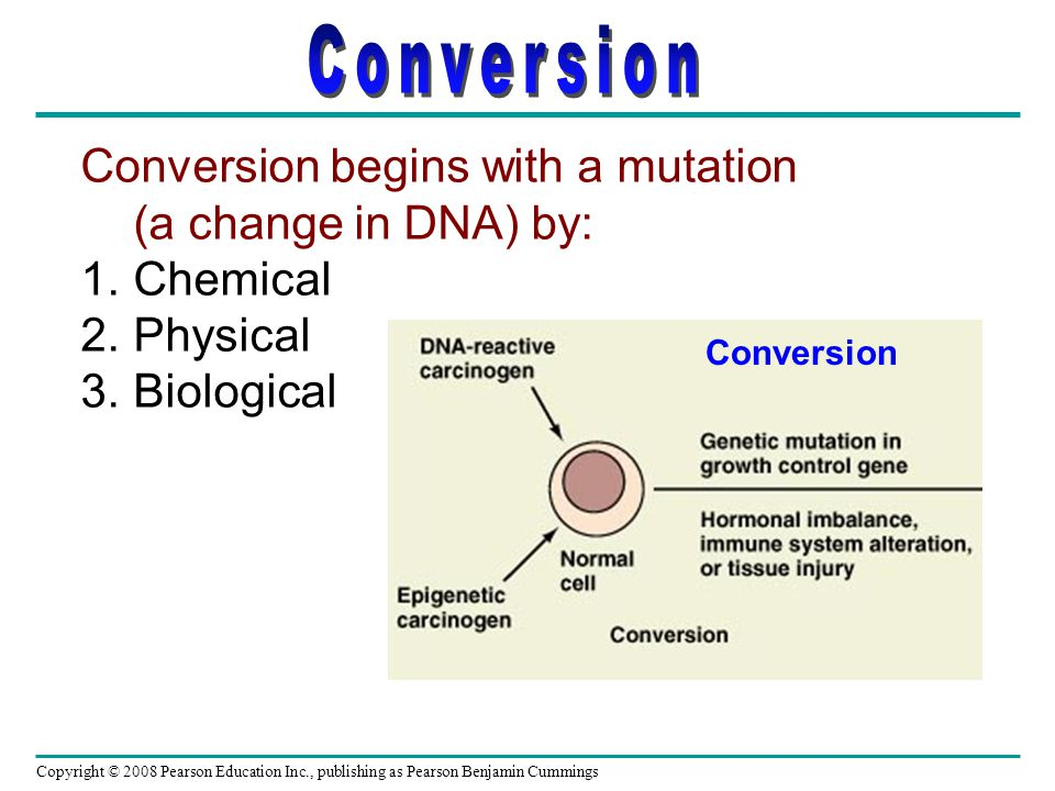 Copyright © 2008 Pearson Education Inc., publishing as Pearson Benjamin Cummings Conversion begins with a mutation (a change in DNA) by: 1.Chemical 2.