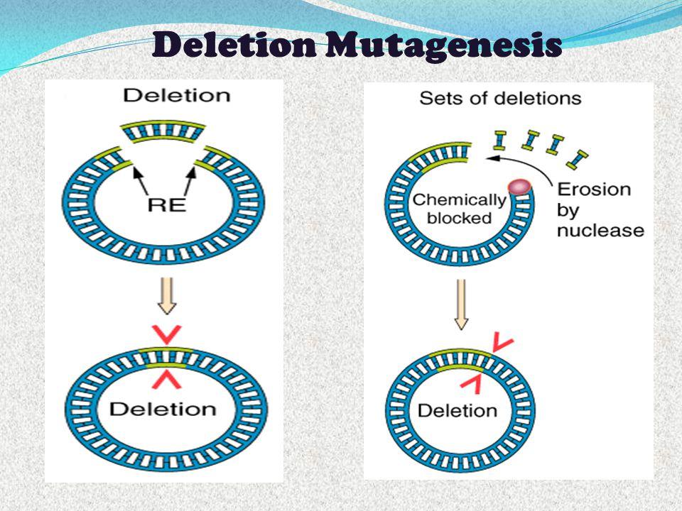 Deletion Mutagenesis