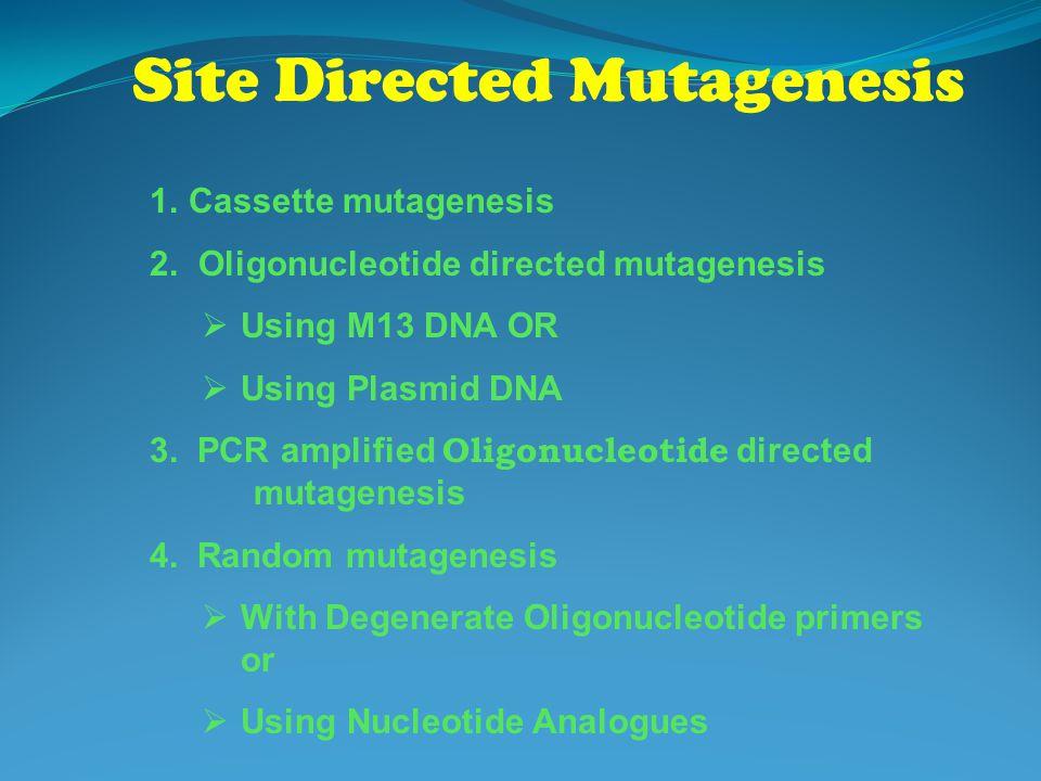 Site Directed Mutagenesis 1.Cassette mutagenesis 2. Oligonucleotide directed mutagenesis  Using M13 DNA OR  Using Plasmid DNA 3. PCR amplified Oligo