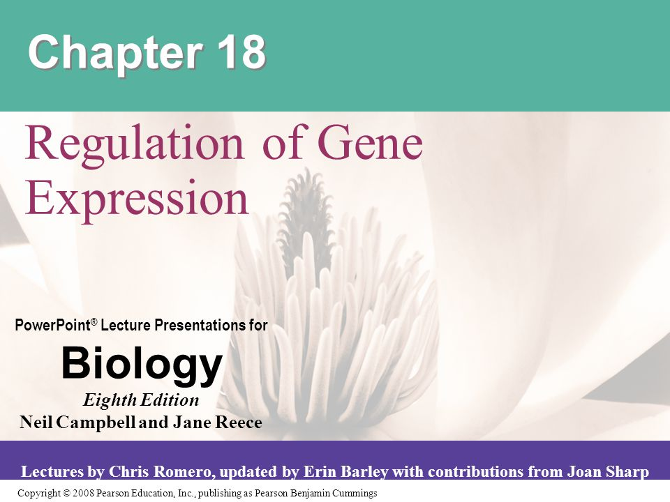 Copyright © 2008 Pearson Education, Inc., publishing as Pearson Benjamin Cummings PowerPoint ® Lecture Presentations for Biology Eighth Edition Neil Campbell and Jane Reece Lectures by Chris Romero, updated by Erin Barley with contributions from Joan Sharp Chapter 18 Regulation of Gene Expression