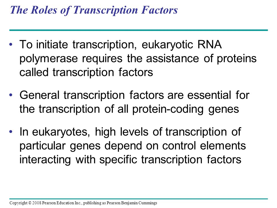 Copyright © 2008 Pearson Education Inc., publishing as Pearson Benjamin Cummings The Roles of Transcription Factors To initiate transcription, eukaryotic RNA polymerase requires the assistance of proteins called transcription factors General transcription factors are essential for the transcription of all protein-coding genes In eukaryotes, high levels of transcription of particular genes depend on control elements interacting with specific transcription factors