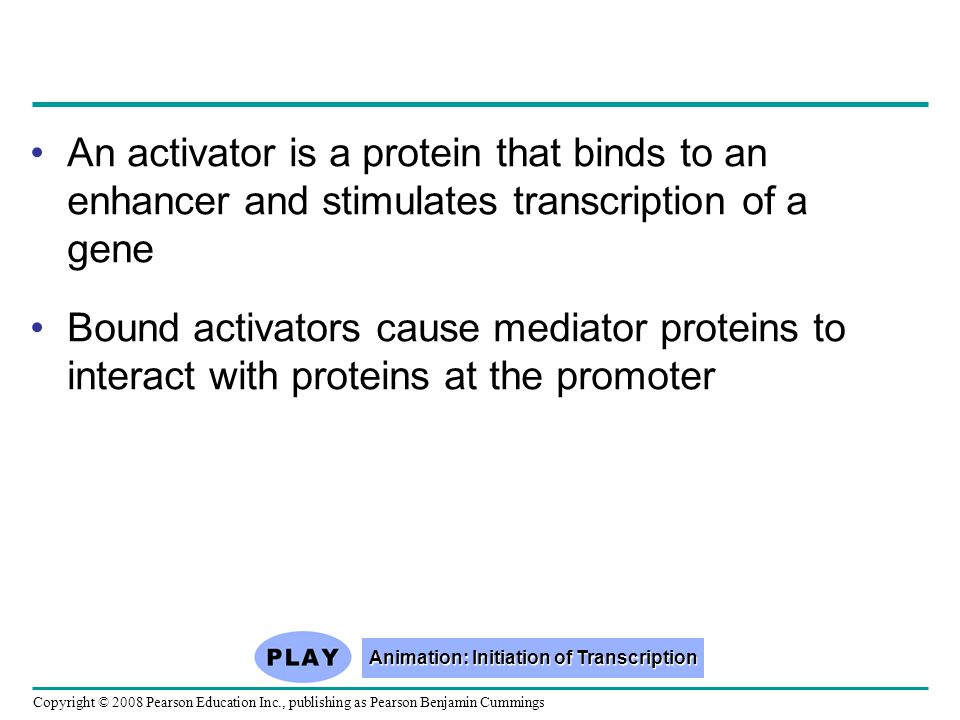 Copyright © 2008 Pearson Education Inc., publishing as Pearson Benjamin Cummings An activator is a protein that binds to an enhancer and stimulates transcription of a gene Bound activators cause mediator proteins to interact with proteins at the promoter Animation: Initiation of Transcription Animation: Initiation of Transcription