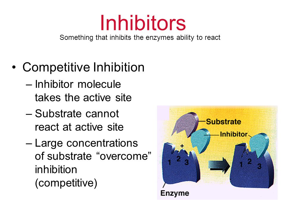 Inhibitors Competitive Inhibition –Inhibitor molecule takes the active site –Substrate cannot react at active site –Large concentrations of substrate