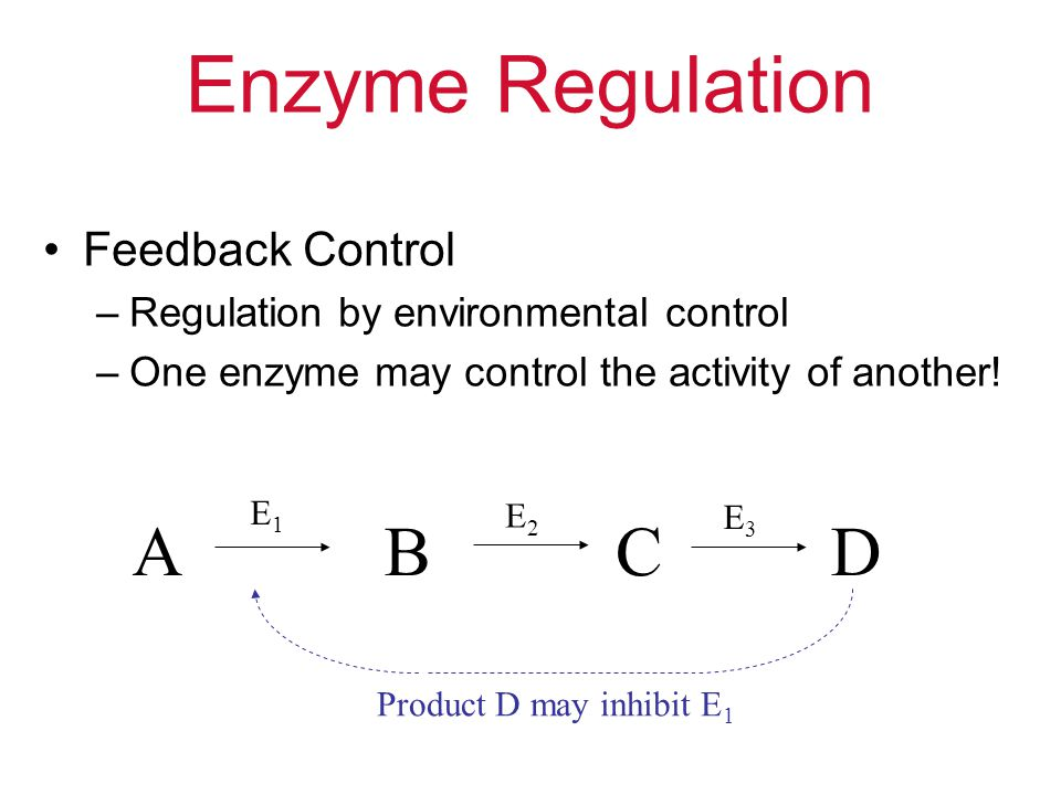Enzyme Regulation Feedback Control –Regulation by environmental control –One enzyme may control the activity of another! ABCD E1E1 E2E2 E3E3 Product D