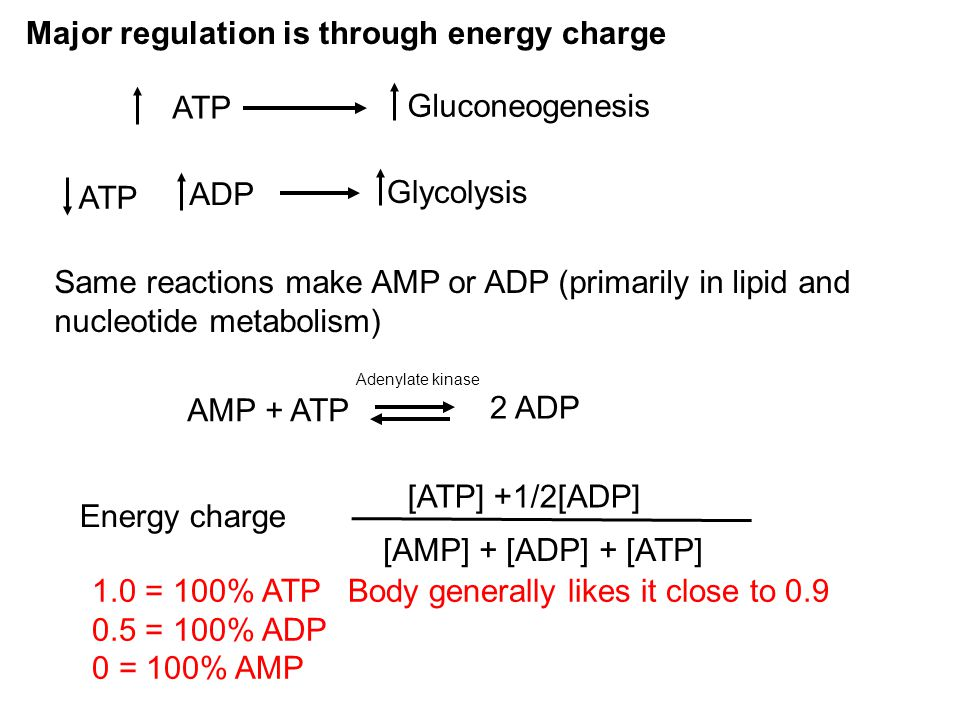 Major regulation is through energy charge ATP Gluconeogenesis Glycolysis ADP Same reactions make AMP or ADP (primarily in lipid and nucleotide metabol