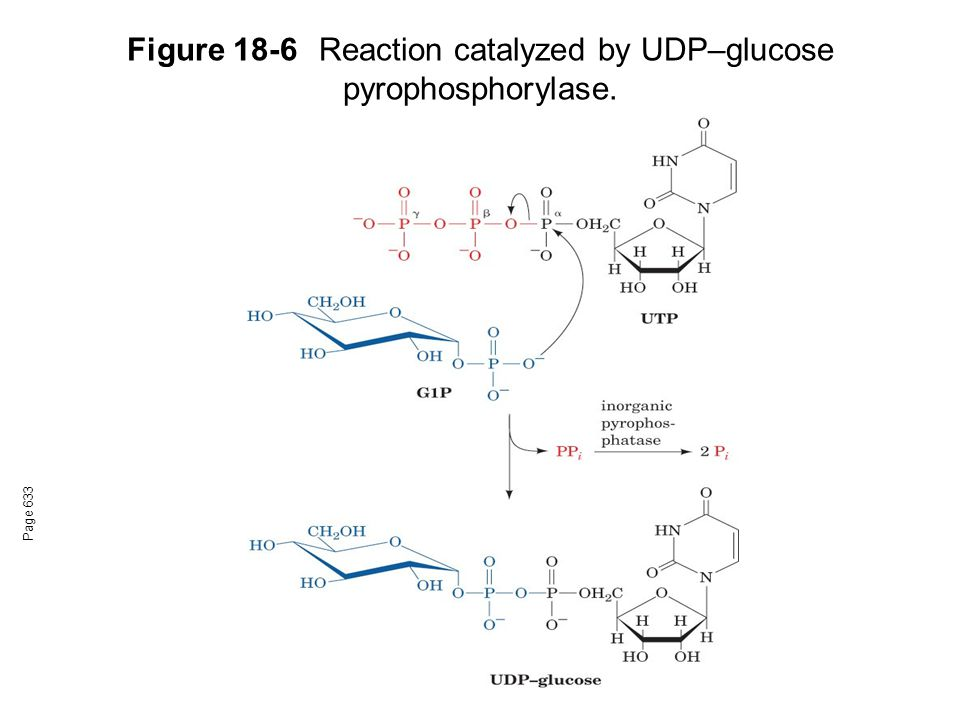 Figure 18-6Reaction catalyzed by UDP–glucose pyrophosphorylase. Page 633