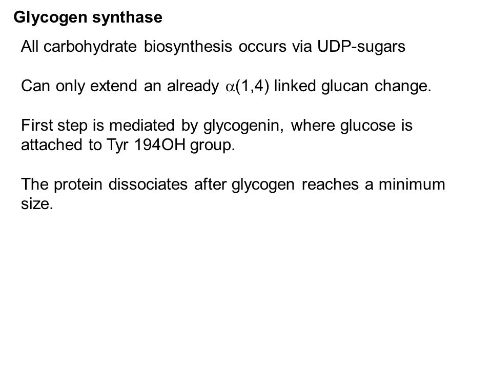 Glycogen synthase All carbohydrate biosynthesis occurs via UDP-sugars Can only extend an already  (1,4) linked glucan change. First step is mediated