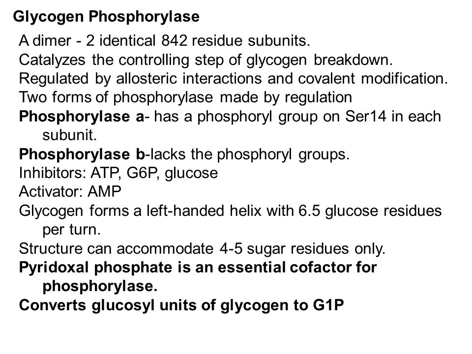 Glycogen Phosphorylase A dimer - 2 identical 842 residue subunits. Catalyzes the controlling step of glycogen breakdown. Regulated by allosteric inter