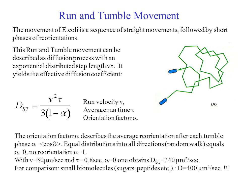 Run and Tumble Movement The movement of E.coli is a sequence of straight movements, followed by short phases of reorientations.