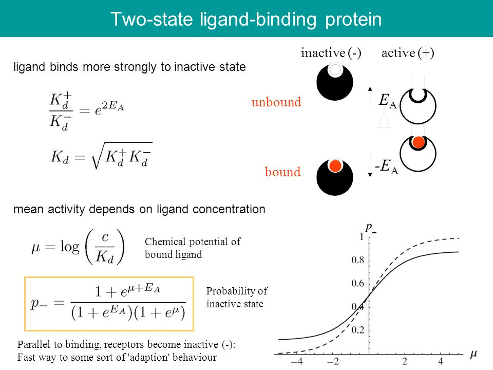Two-state ligand-binding protein ligand binds more strongly to inactive state mean activity depends on ligand concentration EAEA -E A - inactive (-) active (+) unbound bound Chemical potential of bound ligand Probability of inactive state Parallel to binding, receptors become inactive (-): Fast way to some sort of adaption behaviour