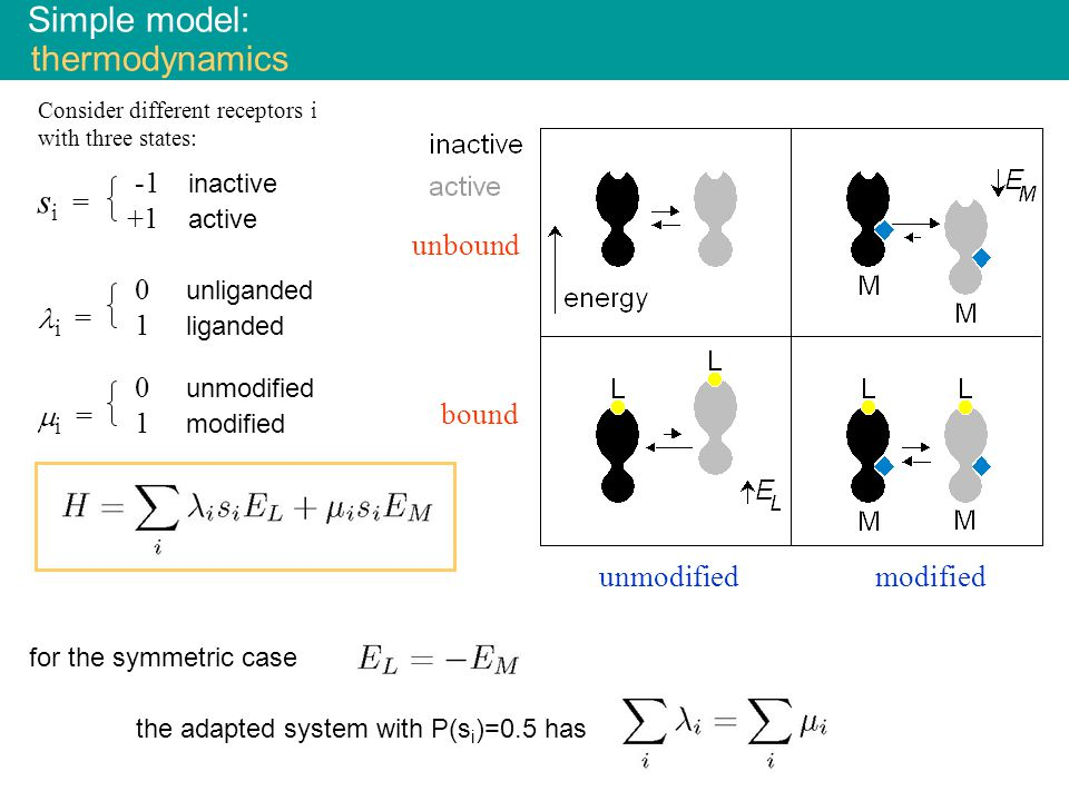 for the symmetric case the adapted system with P(s i )=0.5 has Simple model: thermodynamics s i = i =  i = -1 inactive +1 active 0 unliganded 1 liganded 0 unmodified 1 modified unbound bound modifiedunmodified Consider different receptors i with three states: