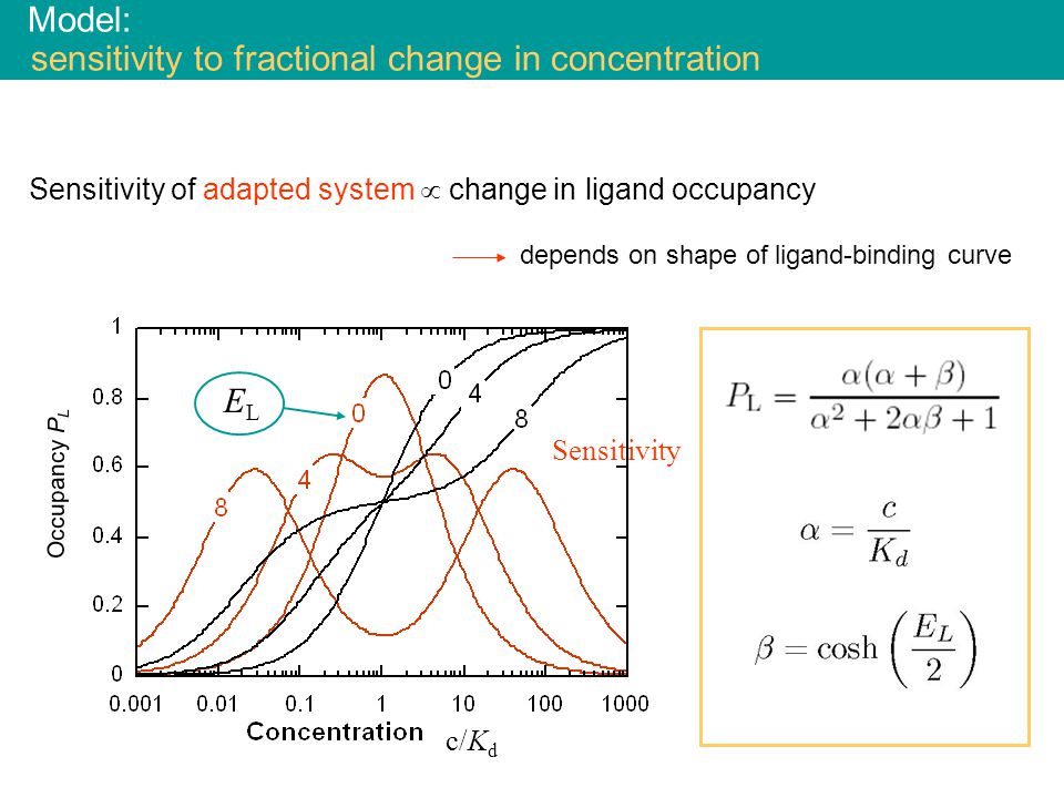 Sensitivity of adapted system  change in ligand occupancy depends on shape of ligand-binding curve Model: sensitivity to fractional change in concentration Occupancy P L ELEL c/K d Sensitivity