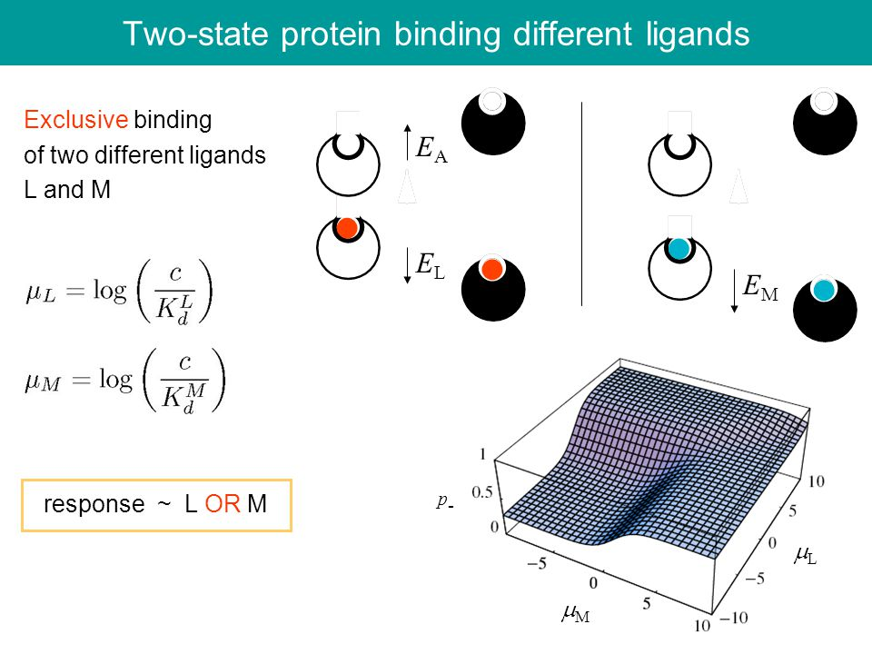 Two-state protein binding different ligands Exclusive binding of two different ligands L and M response ~ L OR M EAEA ELEL EMEM LL p-p- MM