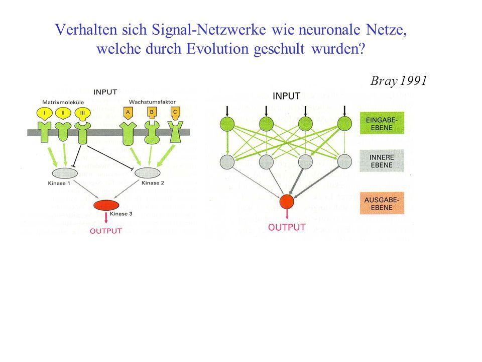 Verhalten sich Signal-Netzwerke wie neuronale Netze, welche durch Evolution geschult wurden.