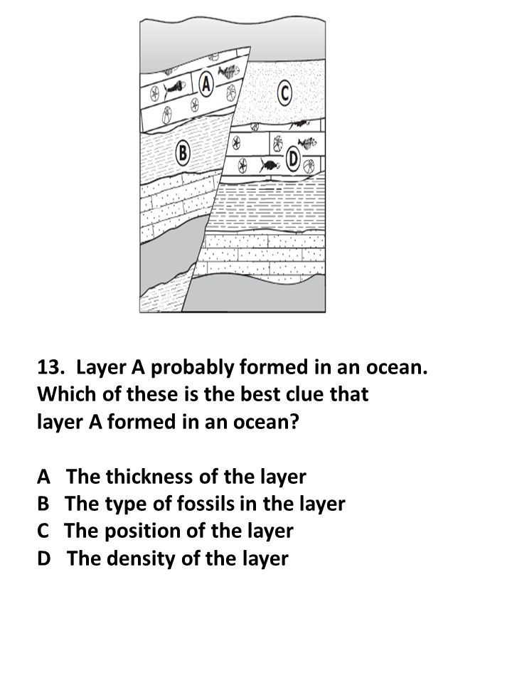 13. Layer A probably formed in an ocean. Which of these is the best clue that layer A formed in an ocean? A The thickness of the layer B The type of f
