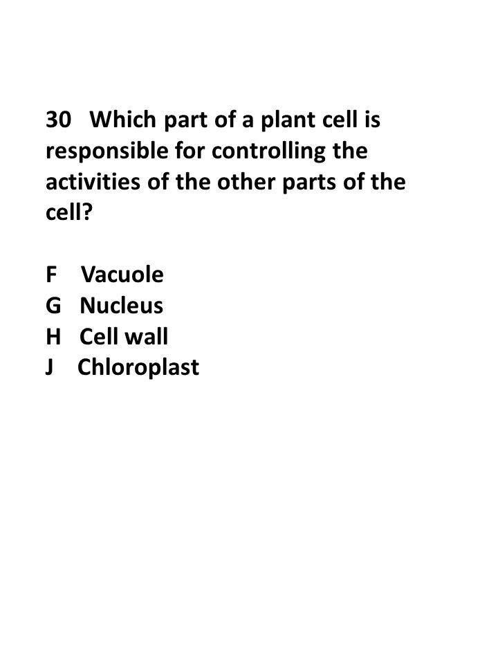 30 Which part of a plant cell is responsible for controlling the activities of the other parts of the cell? F Vacuole G Nucleus H Cell wall J Chloropl