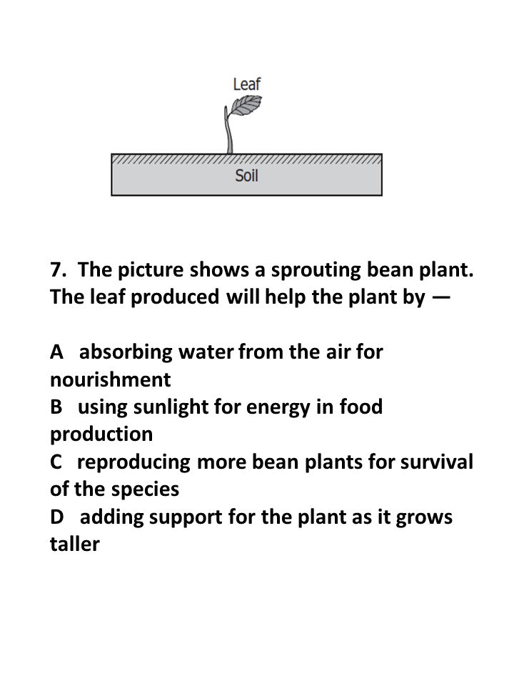 7. The picture shows a sprouting bean plant. The leaf produced will help the plant by — A absorbing water from the air for nourishment B using sunligh
