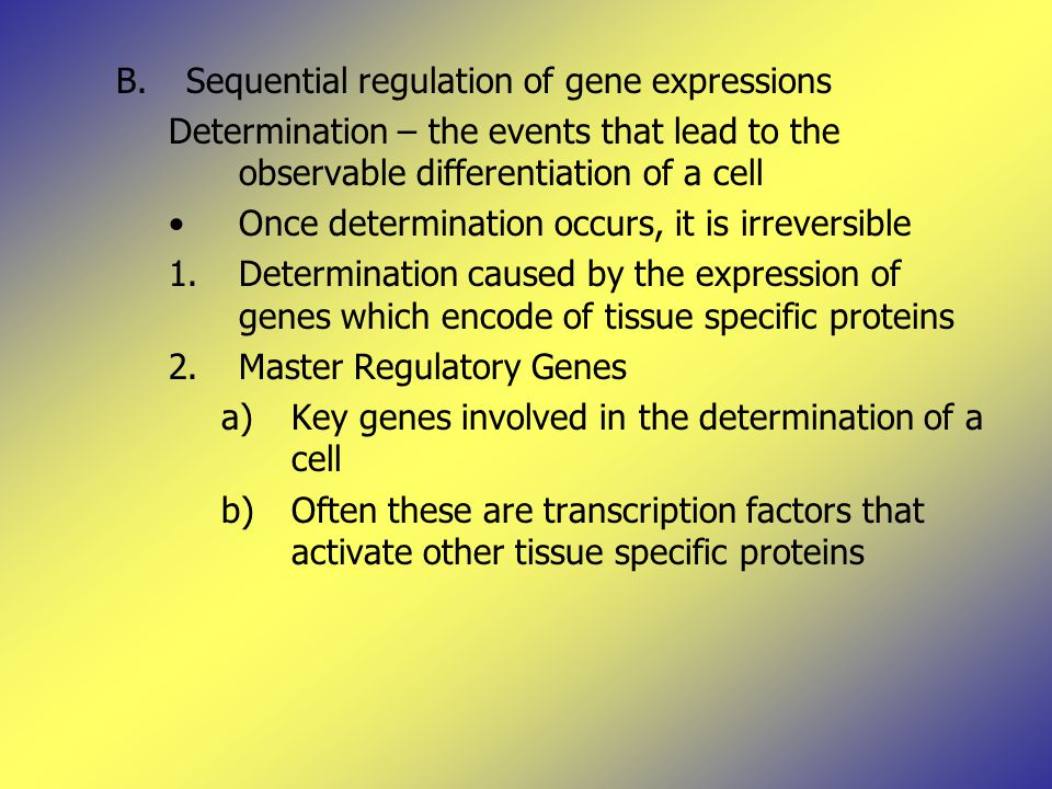 B.Sequential regulation of gene expressions Determination – the events that lead to the observable differentiation of a cell Once determination occurs, it is irreversible 1.Determination caused by the expression of genes which encode of tissue specific proteins 2.Master Regulatory Genes a)Key genes involved in the determination of a cell b)Often these are transcription factors that activate other tissue specific proteins