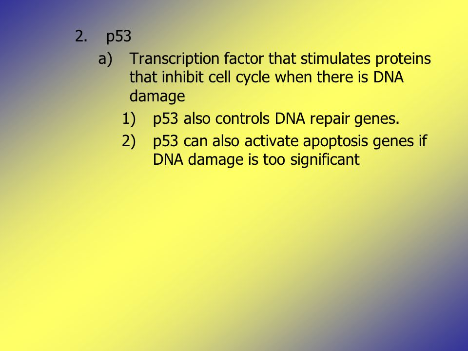 2.p53 a)Transcription factor that stimulates proteins that inhibit cell cycle when there is DNA damage 1)p53 also controls DNA repair genes.