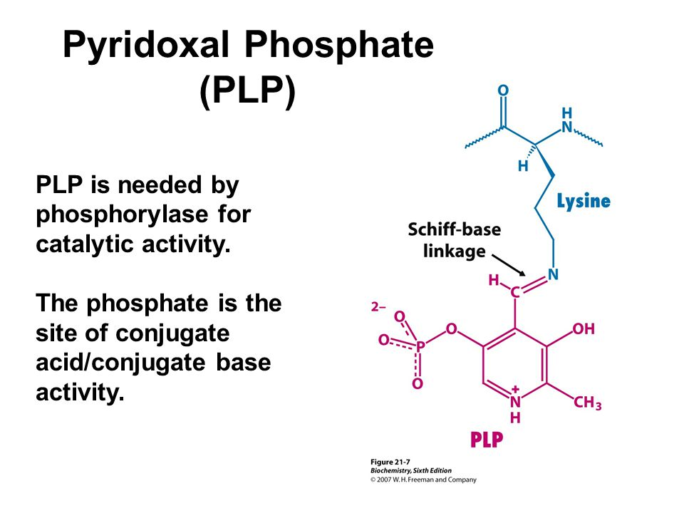 Pyridoxal Phosphate (PLP) PLP is needed by phosphorylase for catalytic activity.
