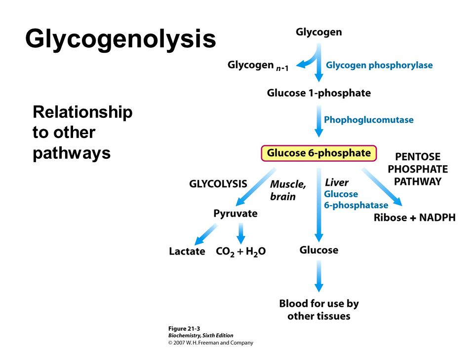 Relationship to other pathways Glycogenolysis