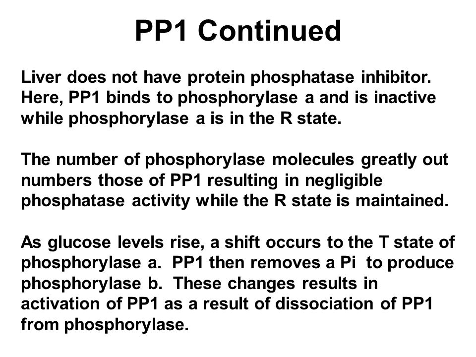 PP1 Continued Liver does not have protein phosphatase inhibitor.