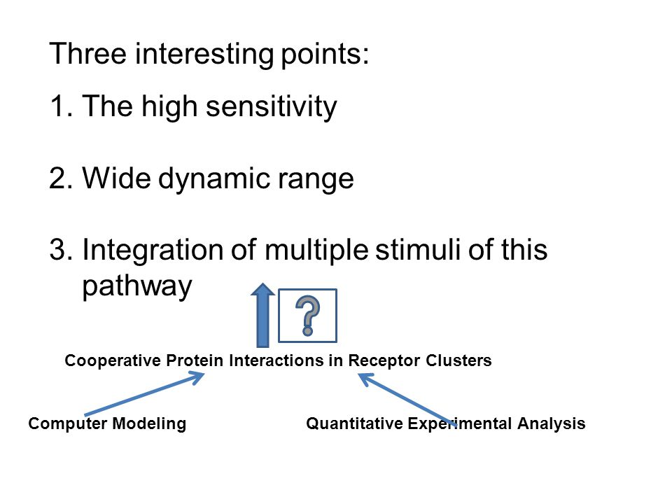 1. The high sensitivity 2. Wide dynamic range 3. Integration of multiple stimuli of this pathway Three interesting points: Computer ModelingQuantitati