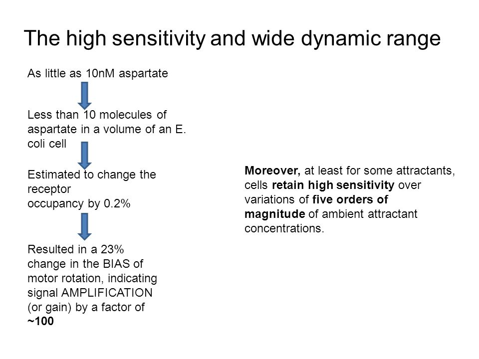 The high sensitivity and wide dynamic range As little as 10nM aspartate Less than 10 molecules of aspartate in a volume of an E.