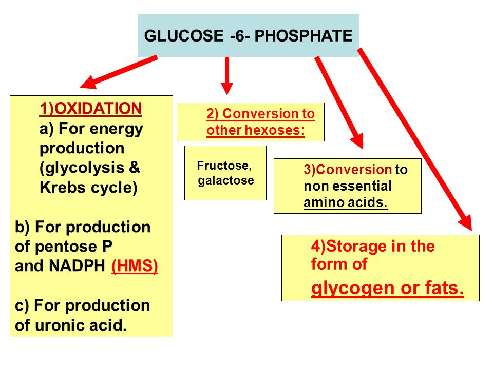 GLUCOSE -6- PHOSPHATE 1)OXIDATION a) For energy production (glycolysis & Krebs cycle) b) For production of pentose P and NADPH (HMS) c) For production