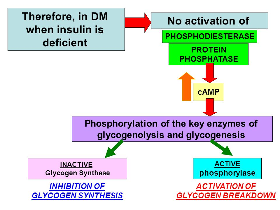 Therefore, in DM when insulin is deficient PROTEIN PHOSPHATASE PHOSPHODIESTERASE No activation of cAMP Phosphorylation of the key enzymes of glycogenolysis and glycogenesis INACTIVE Glycogen Synthase INHIBITION OF GLYCOGEN SYNTHESIS ACTIVE phosphorylase ACTIVATION OF GLYCOGEN BREAKDOWN