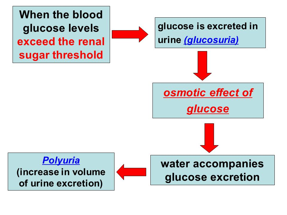 When the blood glucose levels exceed the renal sugar threshold glucose is excreted in urine (glucosuria) osmotic effect of glucose water accompanies g