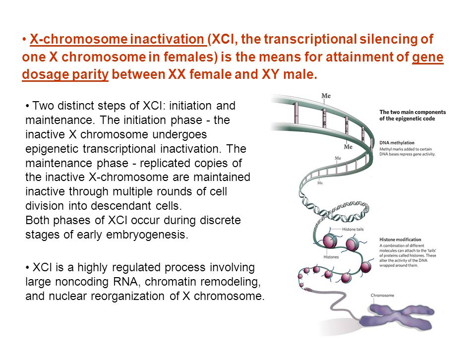 X-chromosome inactivation (XCI, the transcriptional silencing of one X chromosome in females) is the means for attainment of gene dosage parity between XX female and XY male.