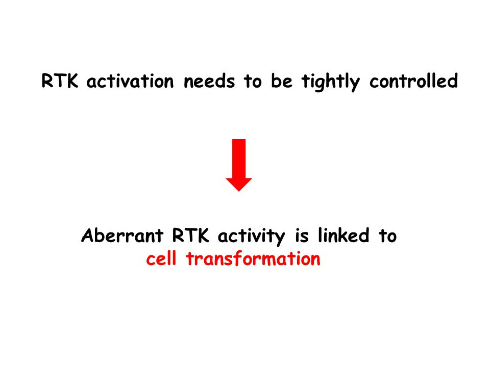 RTK activation needs to be tightly controlled Aberrant RTK activity is linked to cell transformation