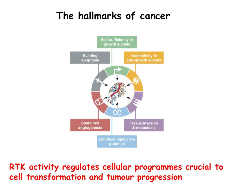 RTK activity regulates cellular programmes crucial to cell transformation and tumour progression The hallmarks of cancer