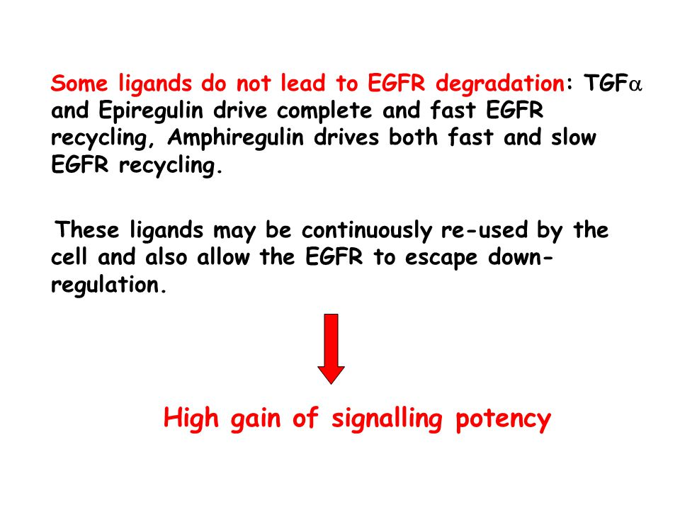 Some ligands do not lead to EGFR degradation: TGF  and Epiregulin drive complete and fast EGFR recycling, Amphiregulin drives both fast and slow EGFR recycling.