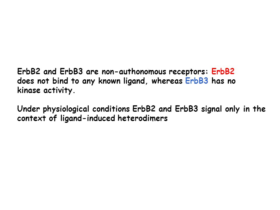 ErbB2 and ErbB3 are non-authonomous receptors: ErbB2 does not bind to any known ligand, whereas ErbB3 has no kinase activity.