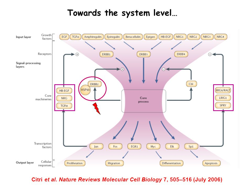 Citri et al. Nature Reviews Molecular Cell Biology 7, 505–516 (July 2006) Towards the system level…