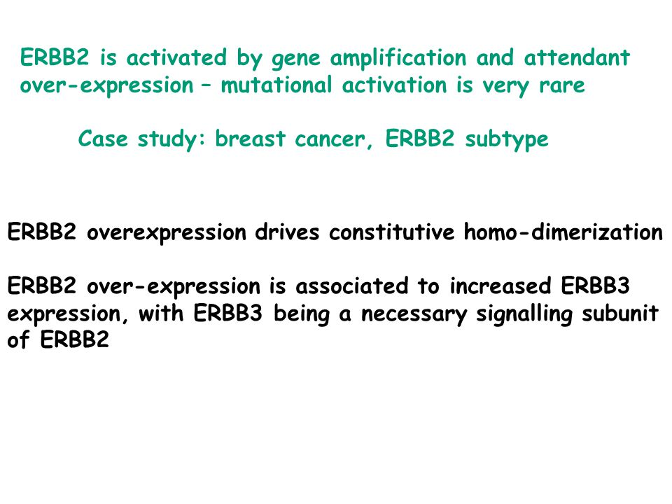ERBB2 is activated by gene amplification and attendant over-expression – mutational activation is very rare Case study: breast cancer, ERBB2 subtype ERBB2 overexpression drives constitutive homo-dimerization ERBB2 over-expression is associated to increased ERBB3 expression, with ERBB3 being a necessary signalling subunit of ERBB2