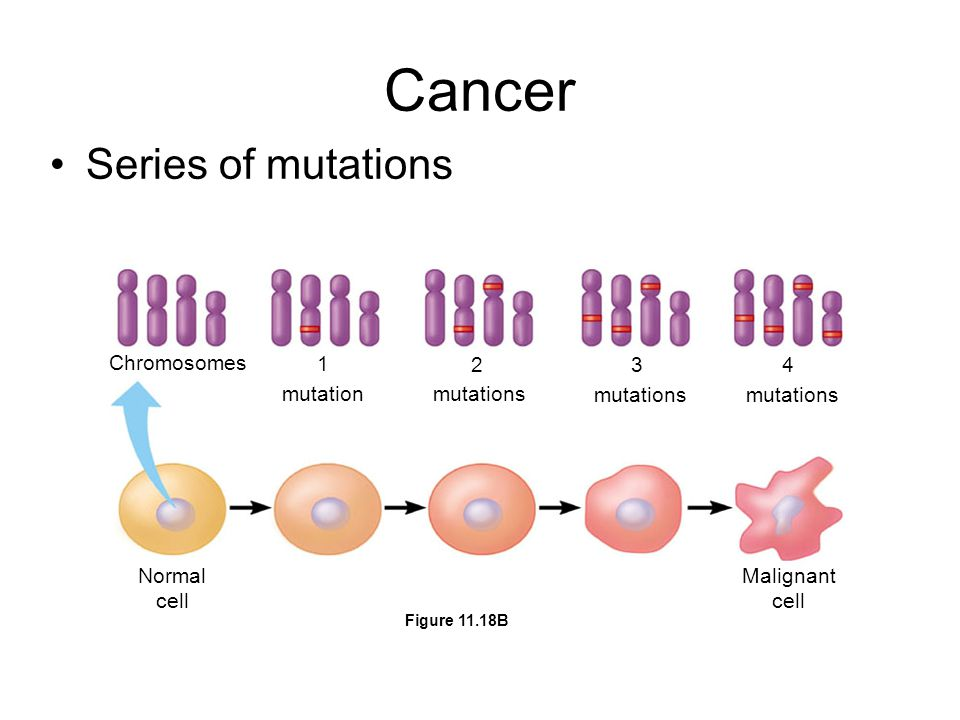 Cancer Series of mutations Chromosomes mutation 1 2 3 4 mutations Normal cell Malignant cell Figure 11.18B