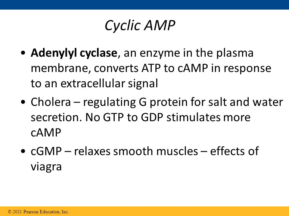 Cyclic AMP Adenylyl cyclase, an enzyme in the plasma membrane, converts ATP to cAMP in response to an extracellular signal Cholera – regulating G protein for salt and water secretion.