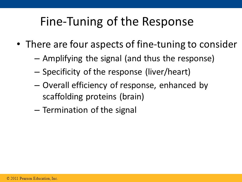 Fine-Tuning of the Response There are four aspects of fine-tuning to consider – Amplifying the signal (and thus the response) – Specificity of the response (liver/heart) – Overall efficiency of response, enhanced by scaffolding proteins (brain) – Termination of the signal © 2011 Pearson Education, Inc.