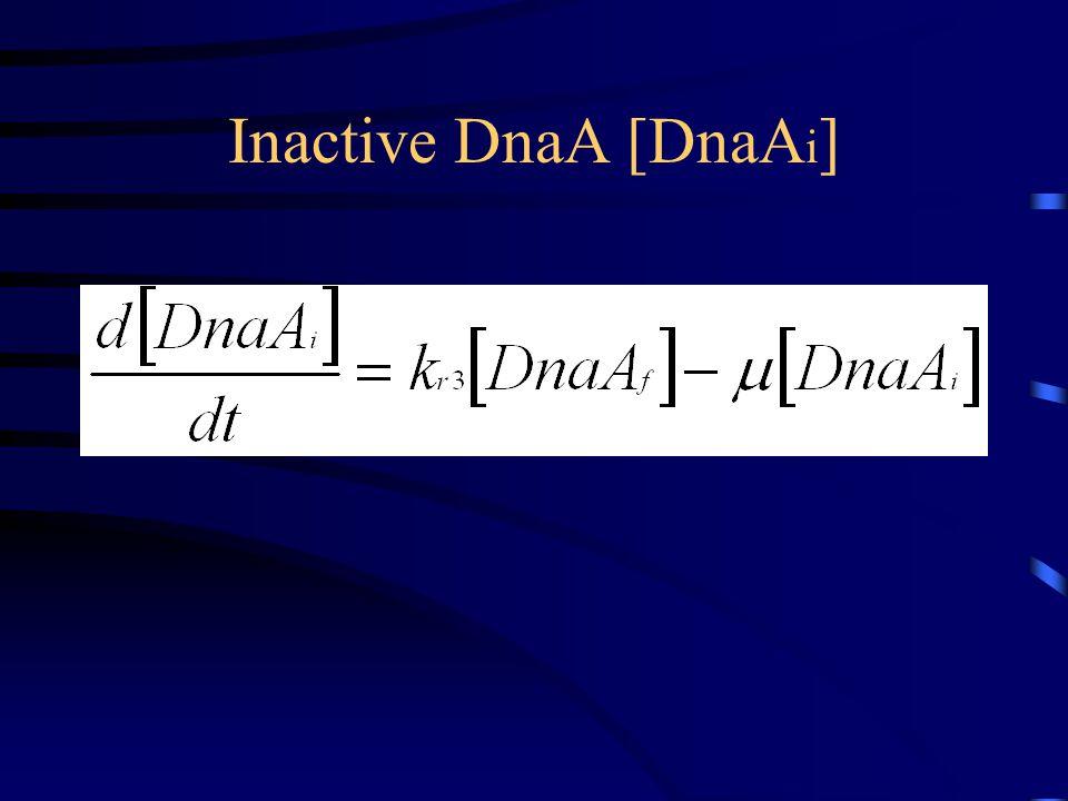 Inactive DnaA [DnaA i ]